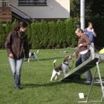 Seminar Beagle  2011 016