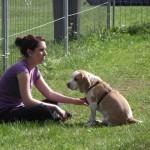 Seminar Beagle  2011 099